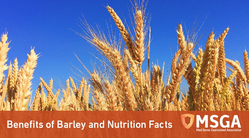Benefits of Barley and Nutrition Facts