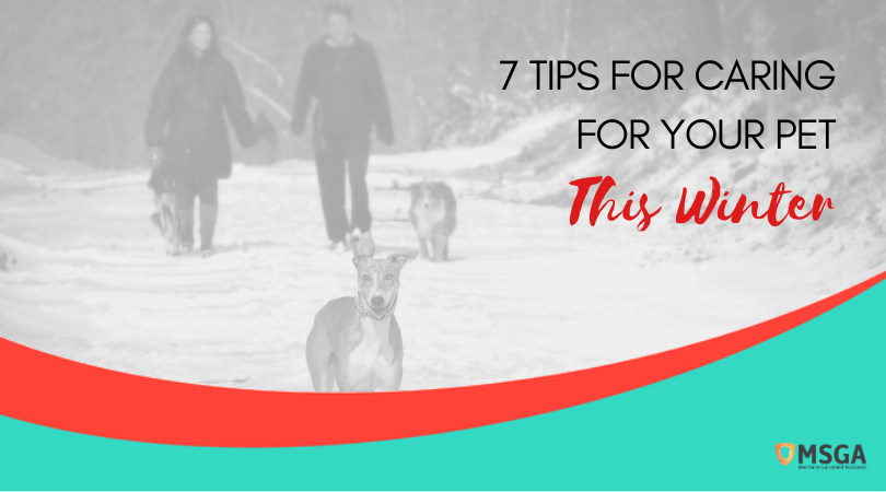 7 Tips For Caring For Your Pet This Winter
